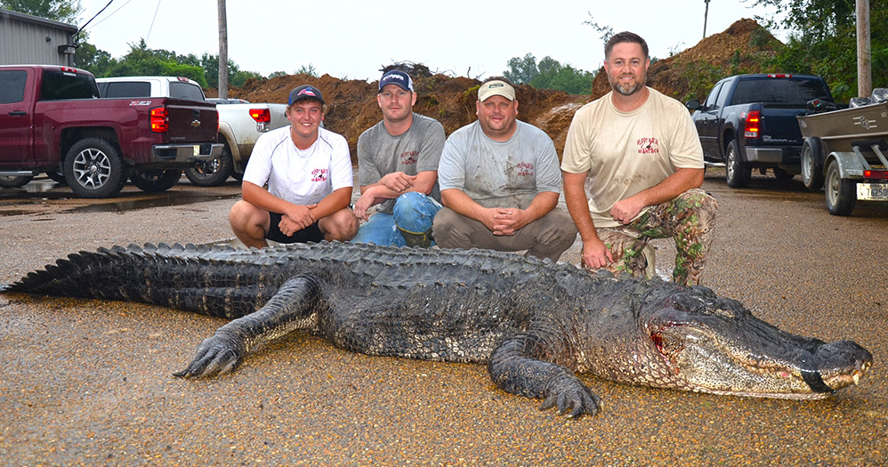 Natchez A New Alligator Length Record Was Certified August 28 2017 By Mississippi Department Of Wildlife Fisheries And Parks Mdwfp Program