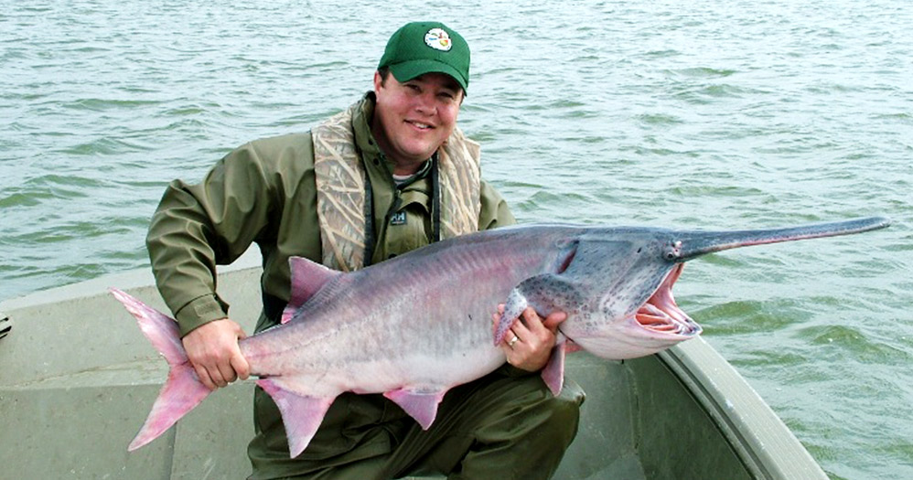 Paddlefish egg harvest season for Arkansas fishing license cost
