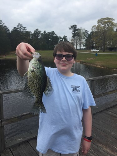 Lake bill waller for Mdwfp fishing reports