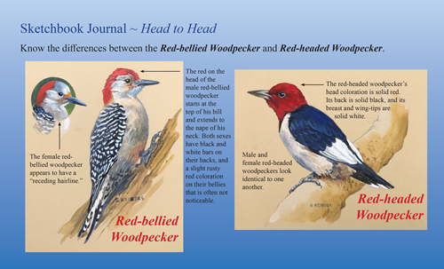 woodpeckers sketch