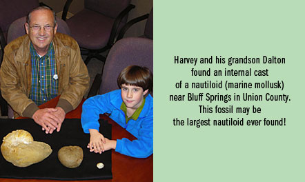 kidsclub_photocaption_nautiloid