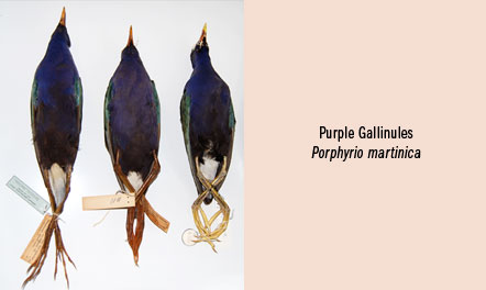 collection_photocaption_purple_birds